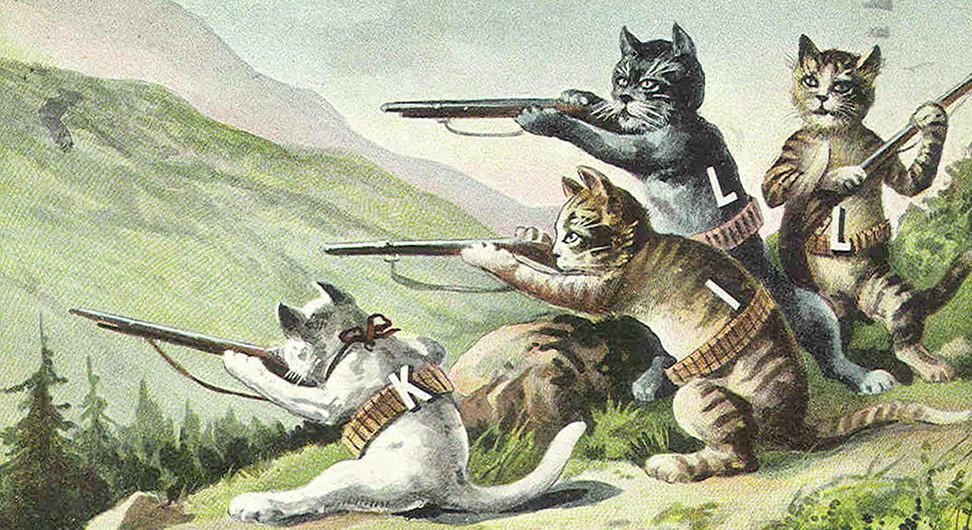 cats-972x530